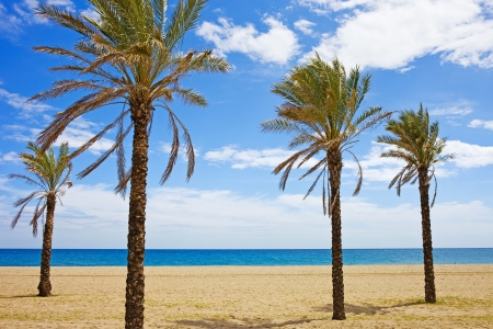Vacation scenery, palm trees on a tranquil beach in Marbella, Costa del Sol, Andalusia region, Spain.