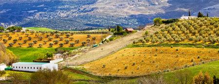 arboleda: Andalucía panorama pintoresco paisaje de colinas con plantaciones de olivos en los campos de cultivo en el sur de España, provincia de Málaga.