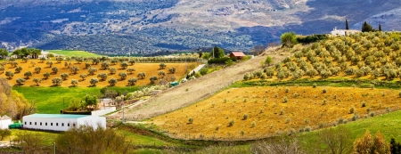 Andalusia panorama pittoresco paesaggio collinare con uliveti, alberi, sui campi coltivati ??nel sud della Spagna, provincia di Malaga.