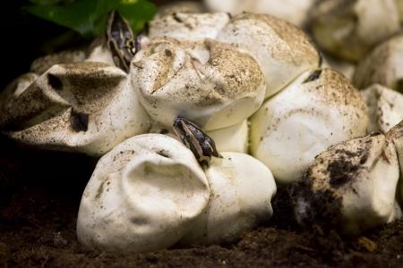 small reptiles: Piccolo bambino cova python dall'uovo ..