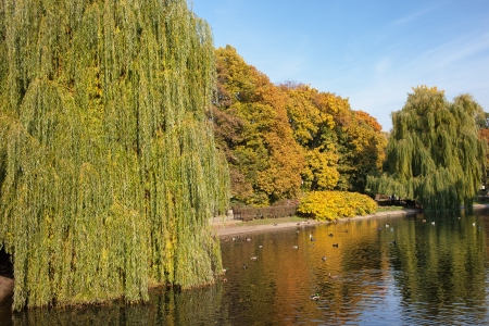 weeping willow: Pond and autumn foliage of the Saxon Garden in Warsaw, Poland. Stock Photo