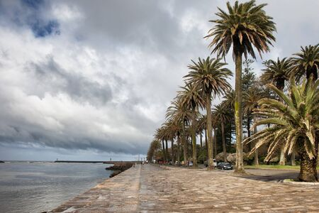 esplanade: Promenade with palm trees at the mouth of river Douro in Foz district of Oporto in Portugal.