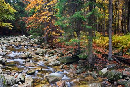 sudetes: Mumlava stream in autumn foliage of Giant Mountains - Krkonose, Karkonosze, Sudetes, Czech Republic.