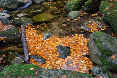 leafage: Autumn leaves blocked on a stream by log and rocks.