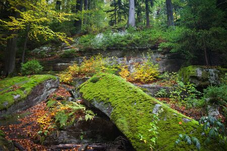 karkonosze: Ancient forest wilderness in autumn, Karkonosze Mountains, Poland. Stock Photo