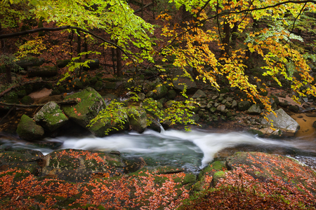 sudetes: Autumn trees and fallen leaves by the creek in forest of Karkonosze Mountains, Poland.
