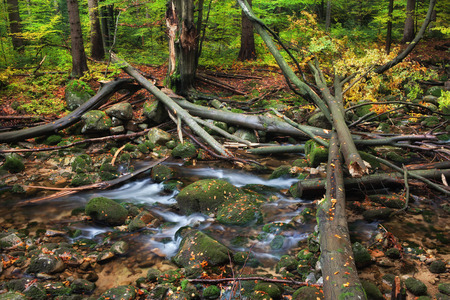 sudetes: Fallen trees after the storm on a stream in the mountain autumn forest Stock Photo