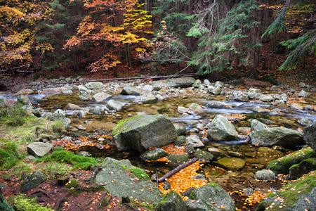 sudetes: Czech Republic, Sudetes, Krkonose Mountains (Karkonosze), stream in autumn forest