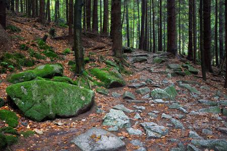 sudetes: Poland, Sudetes, Karkonosze Mountains, Karkonoski National Park, rocky trail in the forest Stock Photo