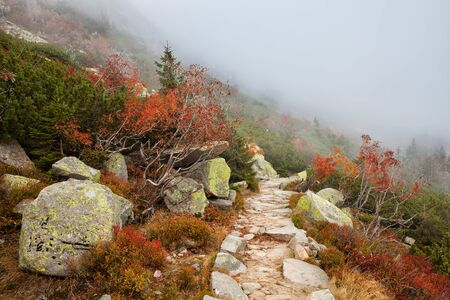 autumn path: Misty mountain path in autumn scenery of the mountains Stock Photo