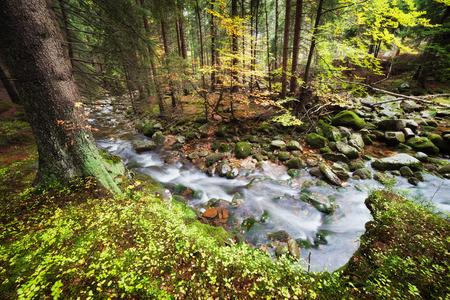 sudetes: Poland, Silesia, Sudetes, Karkonosze Mountains, stream in autumn forest