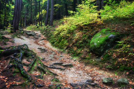 undergrowth: Undergrowth and wild trail in the mountain forest wilderness in autumn Stock Photo