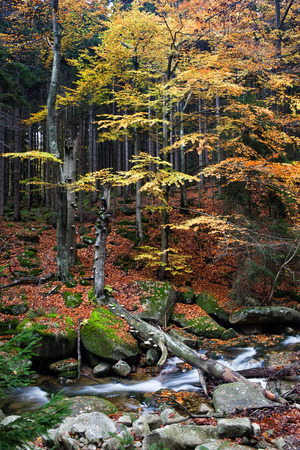 sudetes: Autumn at small creek with fallen tree in Krkonose Mountains forest, Sudetes, Czech Republic Stock Photo