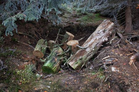 hollow tree: Mountain forest, hole in the ground with tree cut to logs
