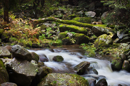 Mountain stream with mossy rocks and fallen tree, nature wilderness