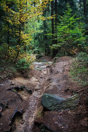 undergrowth: Stream channel without water in the mountain forest Stock Photo