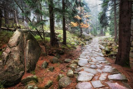footpath: Stone footpath in autumn mountain forest