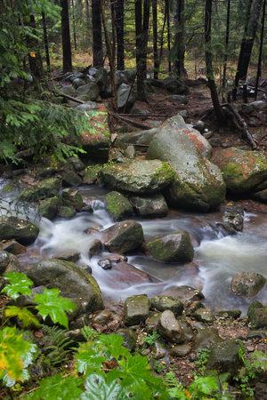 streamlet: Small creek in rocky forest in the mountains