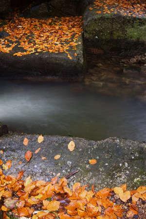 streamlet: Autumn season concept, fallen leaves of flat rock boulders by the creek