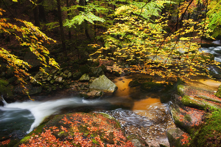 streamlet: Small stream in tranquil scenery of autumn forest in the mountains