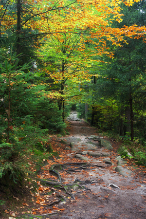 sudetes: Footpath in the forest, tranquil autumn scenery Stock Photo
