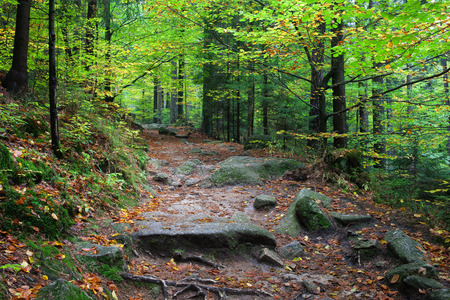 sudetes: Path in the forest, early autumn, Karkonosze National Park, Sudetes, Poland
