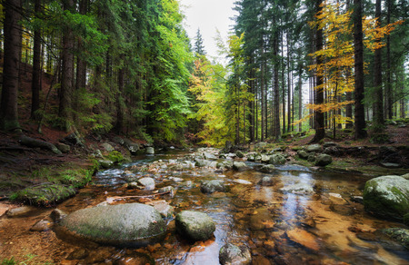 Forest stream in autumn scenery of the mountains, Karkonosze National Park, Poland