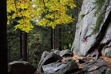 Boulders, rocks in autumn mountain forest wilderness