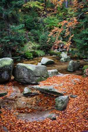 karkonosze: Fallen leaves on rocks at creek in autumn mountain forest, Karkonosze National Park, Poland Stock Photo