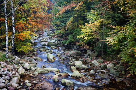 sudetes: Stream in autumn forest, Karkonosze National Park (Karkonoski Park Narodowy), Sudetes, Poland