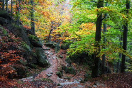 sudetes: Autumn forest with trail in the mountains, beautiful, tranquil scenery, Karkonosze National Park, Sudetes, Poland Stock Photo