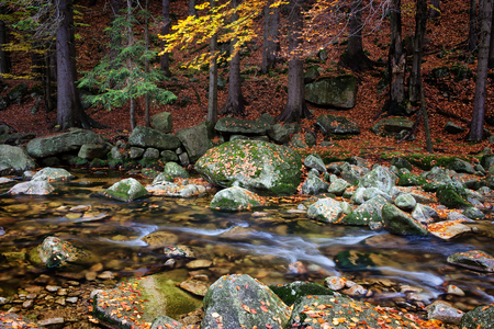 krkonose: Stream in autumn mountain forest, tranquil scenery in natural environment of the mountains Stock Photo