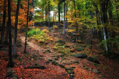 Herbst Wald Landschaft mit Pfad gehen die Berghänge