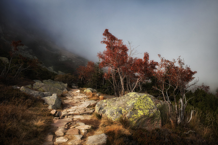 dwarfish: Path in misty mountains during autumn season, dwarfish trees, trail into unknown