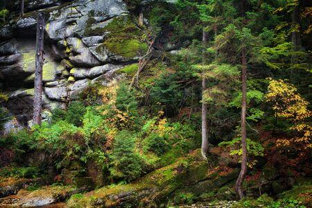 Forest wilderness on steep mountain slope, autumn foliage, mossy rocks Stock Photo