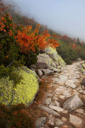 footway: Path along mossy rocks on a mountain slope in autumn