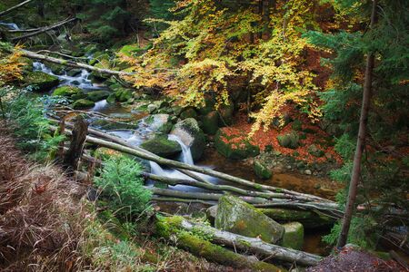 Stream with fallen trees in the wilderness of autumn mountain forest