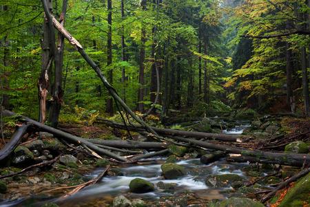 Europe, Poland, Sudetes, Karkonosze Mountains, stream with fallen trees, mountain forest wilderness