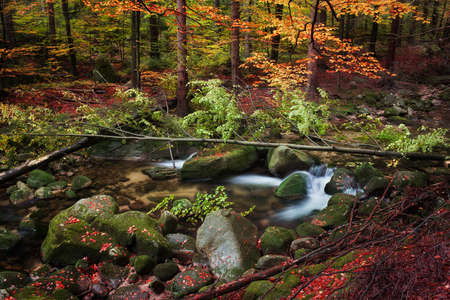 sudetes: Autumn forest tranquil scenery, stream with fallen tree in picturesque mountains wilderness, Sudetes, Poland, Europe