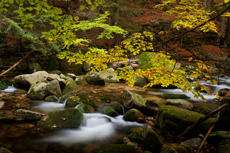 stream: Stream in October, early autumn in mountain forest, Karkonosze Mountains, Sudetes, Poland, Europe Stock Photo