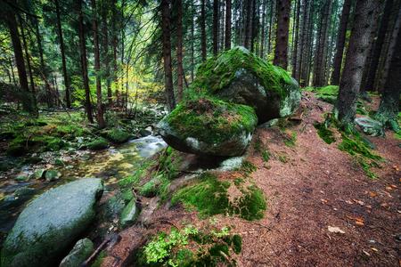 Mossy rocks at forest stream in Karkonosze Mountains, Poland Stock Photo