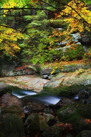 Small creek in autumn forest of Karkonosze Mountains, Poland