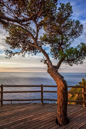 Viewpoint terrace with wooden flooring and a tree overlooking the sea at sunrise on Costa Brava, Catalonia, Spain