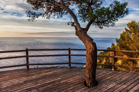 Sunrise on the sea from a viewpoint terrace with a tree in Tossa de Mar on Costa Brava, Catalonia, Spain