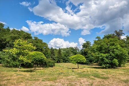 Prato nel parco boschivo in una giornata di sole paesaggio.