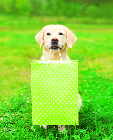Beautiful Golden Retriever dog is holding a green shopping bag in the teeth on a grass on a summer