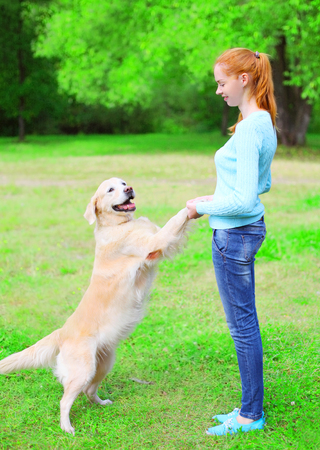 Happy owner woman is training her Golden Retriever dog on the grass in a summer Stock Photo