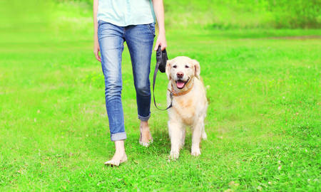 razas de personas: Owner woman with Golden Retriever dog is walking together in a spring park