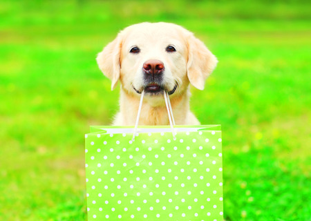 Pretty Golden Retriever dog is holding a green shopping bag in the teeth on a grass on a summer  Stock Photo