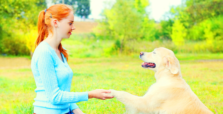 owner is training her Golden Retriever dog on the grass, giving paw to hand